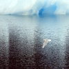 largla010809lindenowfjord-012w1.jpg