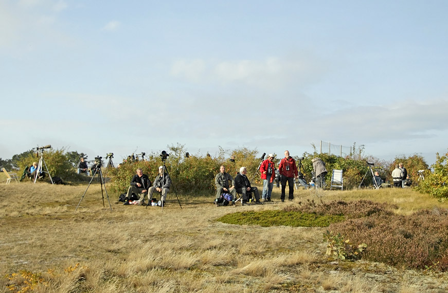 An international assembly of birders at Falsterbo, Swedes, Danes, Dutch and Belgians.